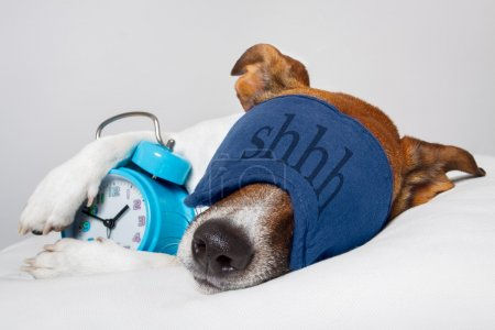Photo for Dog sleeping with alarm clock and sleeping mask - Royalty Free Image