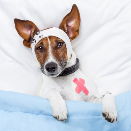 Sick dog with bandages lying on bed