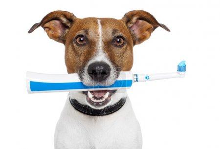 Photo pour Chien avec brosse à dents électrique - image libre de droit