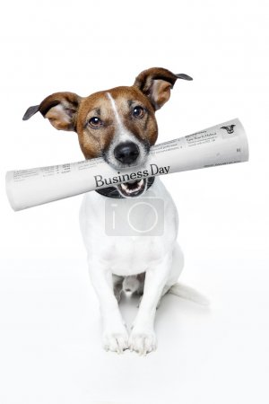 Dog holding a newspaper