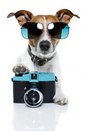 Dog taking pictures with shades on...