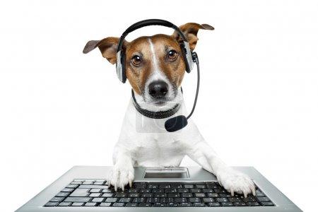 Photo pour Chien à l'aide d'un ordinateur avec casques d'écoute - image libre de droit