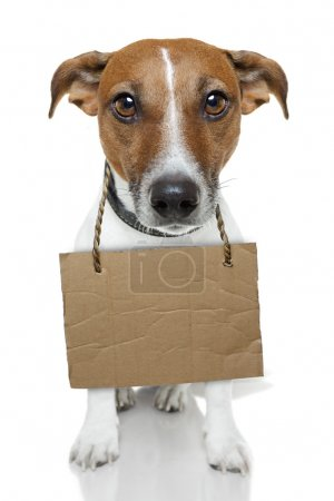 Photo for Dog with empty cardboard and looking very sad - Royalty Free Image