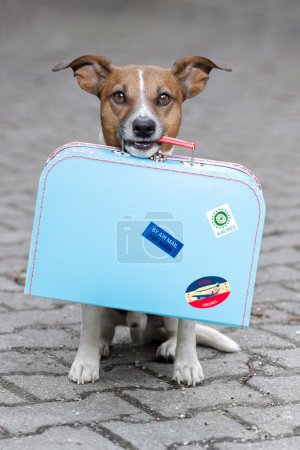 Photo for Dog holding a blue bag - Royalty Free Image