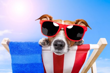 Photo for Dog sunbathing on a deckchair - Royalty Free Image