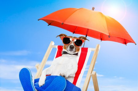 Dog on a deck chair