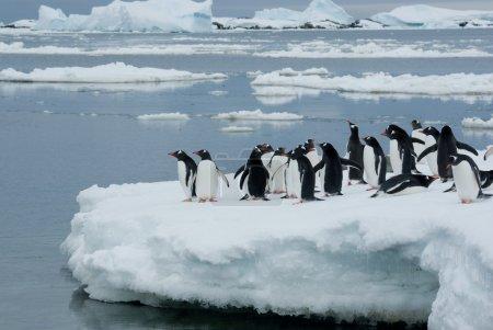 Photo pour Gentoo bande de pingouin est sur la glace dans le contexte des icebergs - image libre de droit
