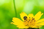 Včela v zeleni
