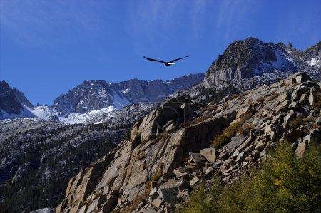 Photo pour Pygargue à tête blanche planant sur des sommets rocheux avec un ciel bleu vif . - image libre de droit