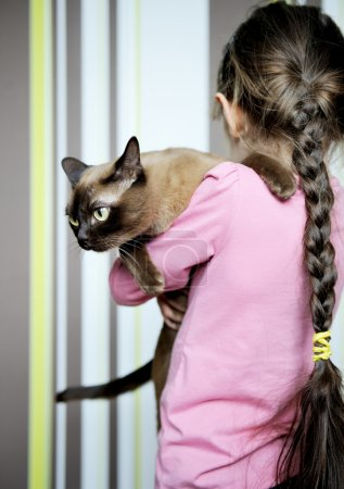 Little girl carrying burmese cat