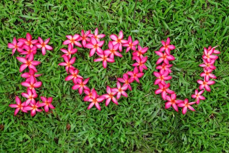 I love you like a flower