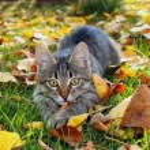 Cat hides1...