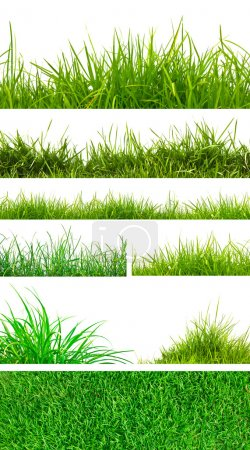 Photo for Backgrounds of fresh spring green grass Isolated On White - Royalty Free Image