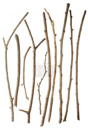 Sticks and twigs
