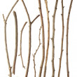 Sticks and twigs isolated on white background...