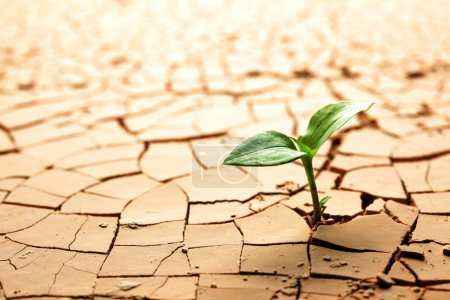 Photo for Plant in dried cracked mud - Royalty Free Image