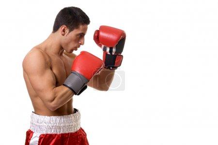 Photo pour Boxer dans les troncs rouges. Studio coup sur blanc. - image libre de droit