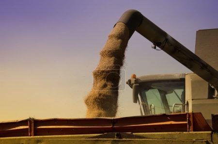 Photo pour Le chargement du grain de blé - image libre de droit