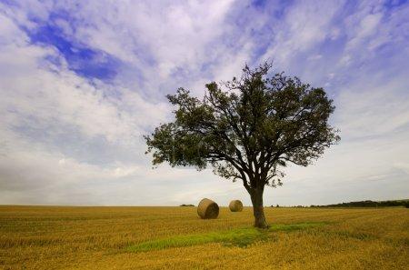 Photo pour Les balles d'arbre et de paille - image libre de droit
