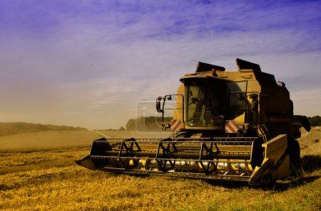 Photo pour Moissonneuse-batteuse récolte le maïs - image libre de droit