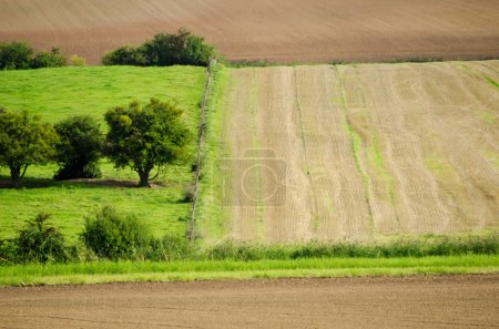 Wheat fields and meadows green