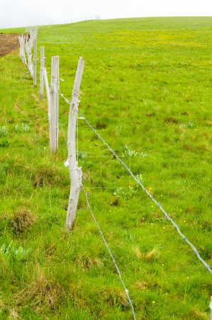 Big green meadow.