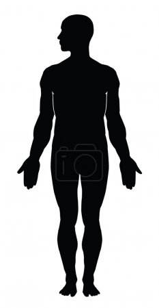 Illustration for Human body silhouette - Royalty Free Image