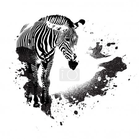 Illustration for Zebra in black and white with splatted paint accents - Royalty Free Image