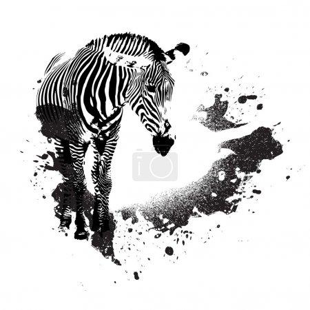Grungy Zebra
