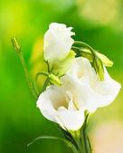 Krásný jarní květy na zeleném pozadí