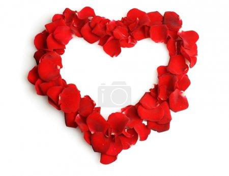 Foto de Hermoso corazón de pétalos de rosa rojas aislado en blanco - Imagen libre de derechos
