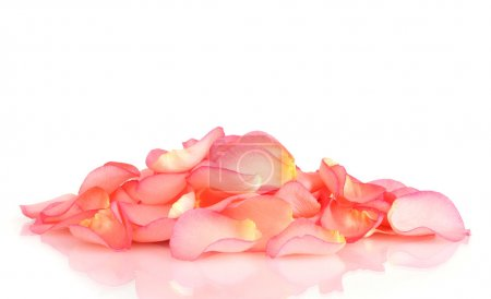Photo for Beautiful pink rose petals isolated on white - Royalty Free Image