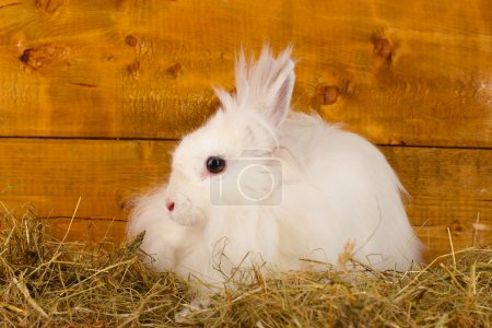 Fluffy white rabbit in a haystack on wooden background