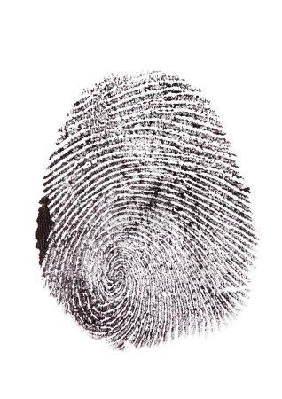 Fingerprint isolated on white