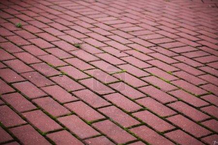 Garden stone path Brick Sidewalk