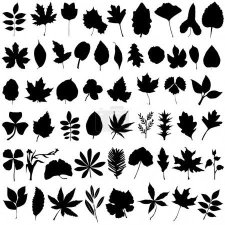 Illustration for Floral and leaf set vector - Royalty Free Image
