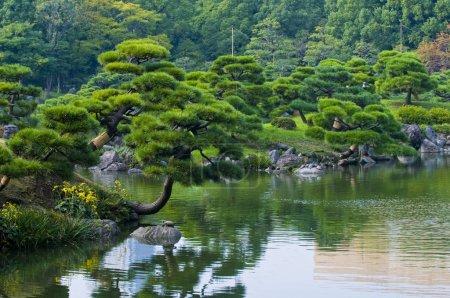 Photo pour Jardin japonais à tokyo, Japon - image libre de droit