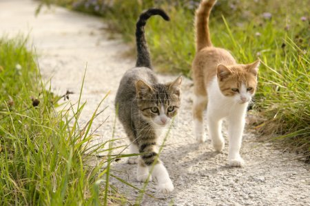 Two kittens going for a walk together in the garde...