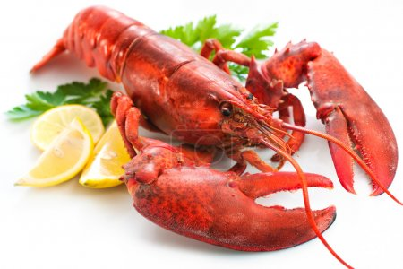 Lobster with parsley and lemon slices over white...