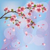 Background with sakura blossom - Japanese cherry tree