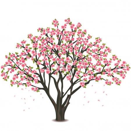 Illustration for Sakura blossom - Japanese cherry tree, isolated on white background - Royalty Free Image