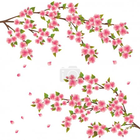 Illustration for Realistic sakura blossom - Japanese cherry tree with flying petals isolated on white background - Royalty Free Image