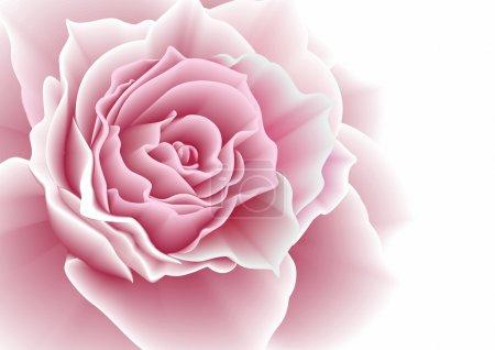 Illustration for Pink rose. Vector illustration. - Royalty Free Image