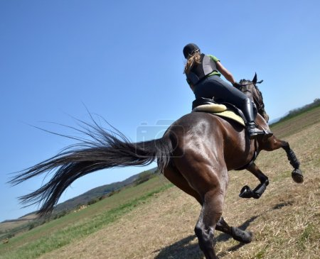 Photo pour Rider dans une sauteuse Voir la - image libre de droit