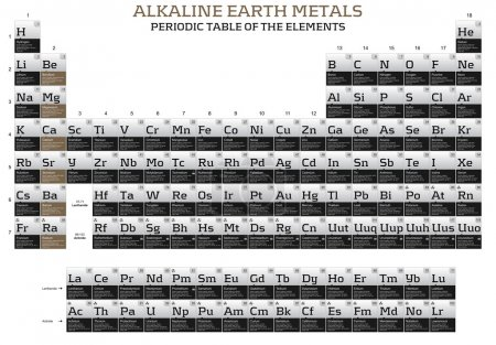 Alkaline earth metals elements in the periodic table
