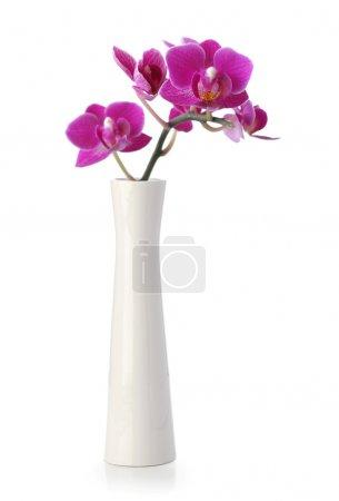 Photo pour Fleur d'orchidée rose dans un vase blanc isolé sur blanc - image libre de droit