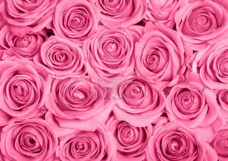 Photo for Background image of pink roses - Royalty Free Image