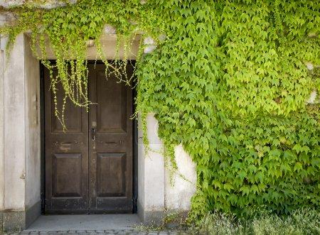 Photo pour Huis clos et les vignes verts - image libre de droit