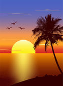 Sunset with palmtree silhouette