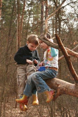 Photo pour Des enfants jouent à l'extérieur dans une forêt - image libre de droit